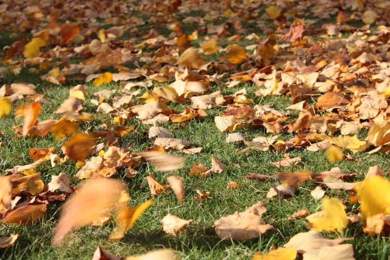 Fogli in autunno fotografie stock