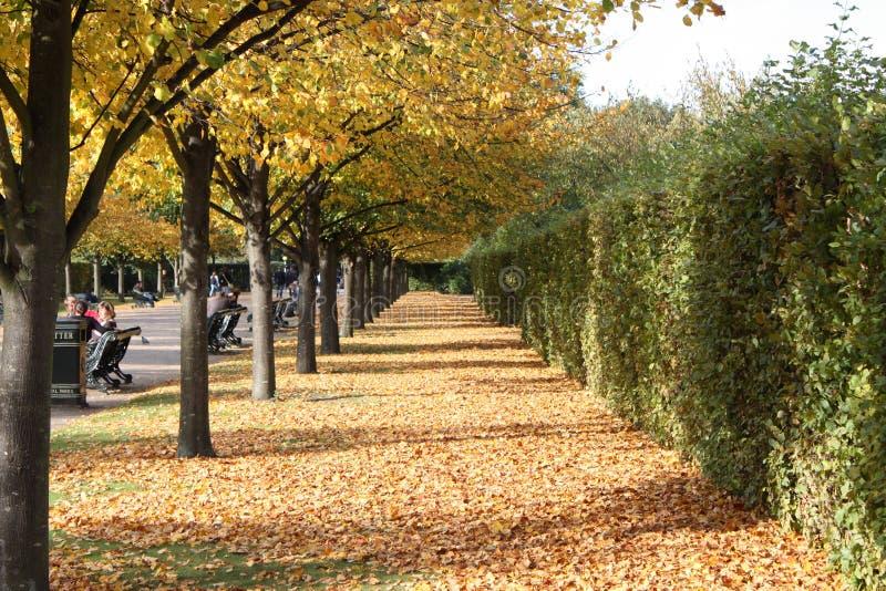 Fogli in autunno fotografia stock