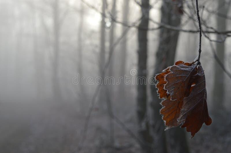 Fogli congelati fotografia stock