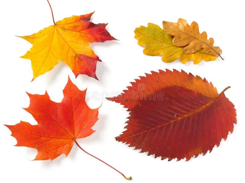 fogli d'autunno fotografie stock libere da diritti