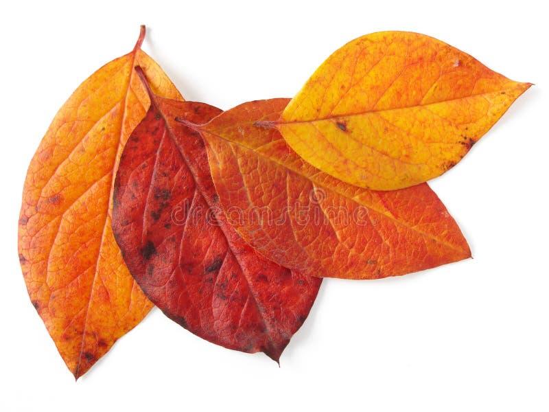 fogli d'autunno immagini stock libere da diritti