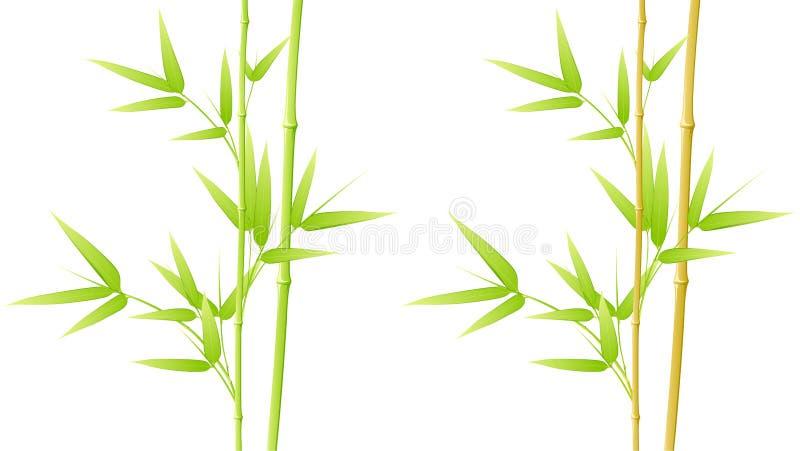 Fogli del bambù illustrazione vettoriale