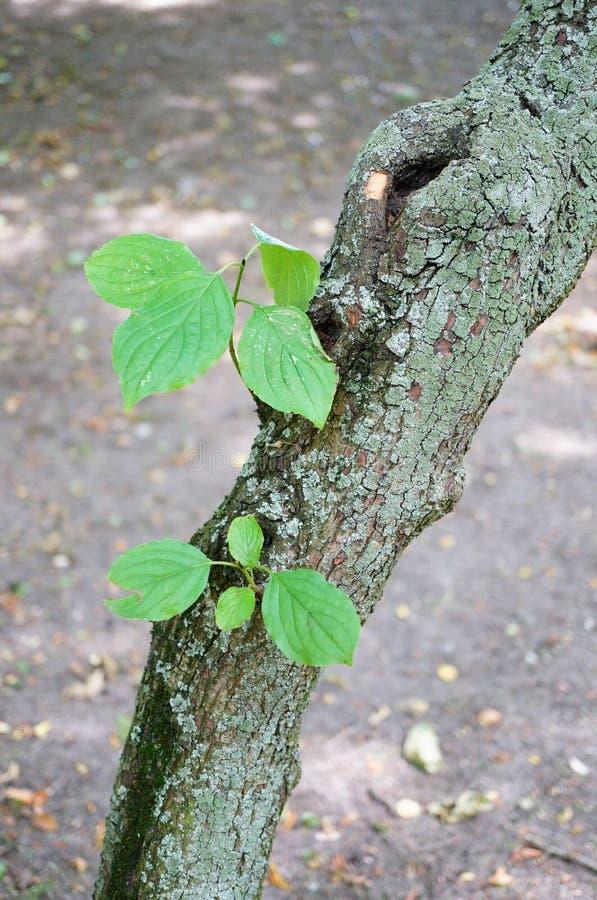 Fogli dell'albero immagini stock