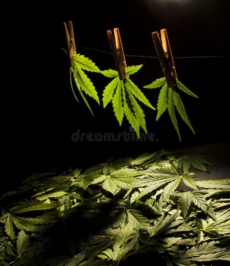 Fogli dell'albero di erba 4 fotografie stock libere da diritti