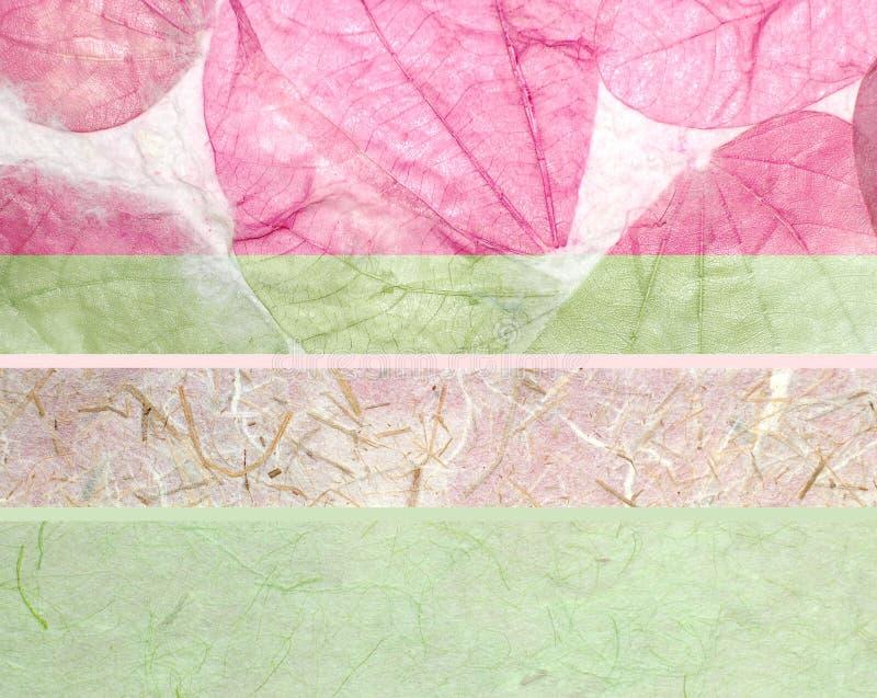 fogli della farfalla e documento di riso fotografia stock