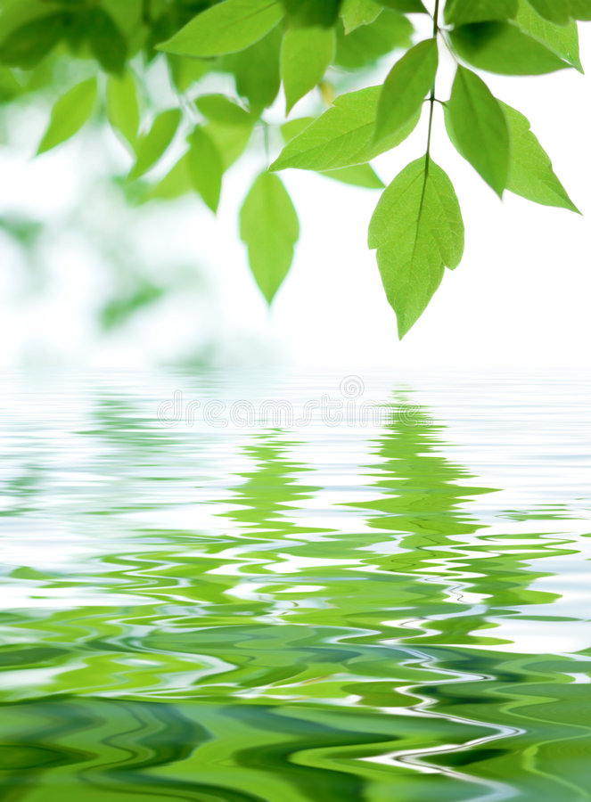 Download Fogli della foresta fotografia stock. Immagine di luminoso - 7308994