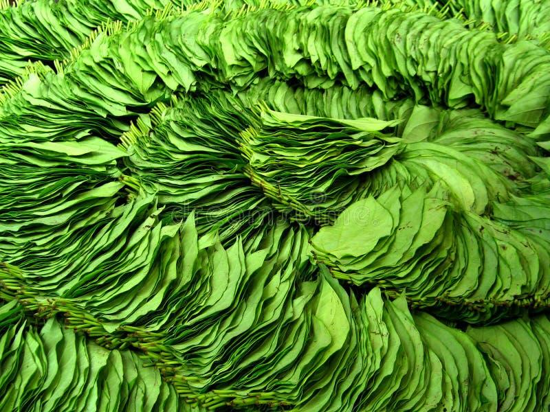 Fogli della noce di betel fotografie stock