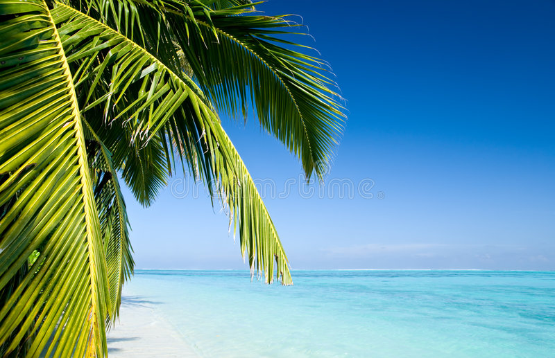 Fogli della palma fotografia stock libera da diritti