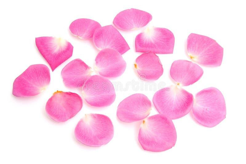 Fogli della rosa di colore rosa fotografia stock
