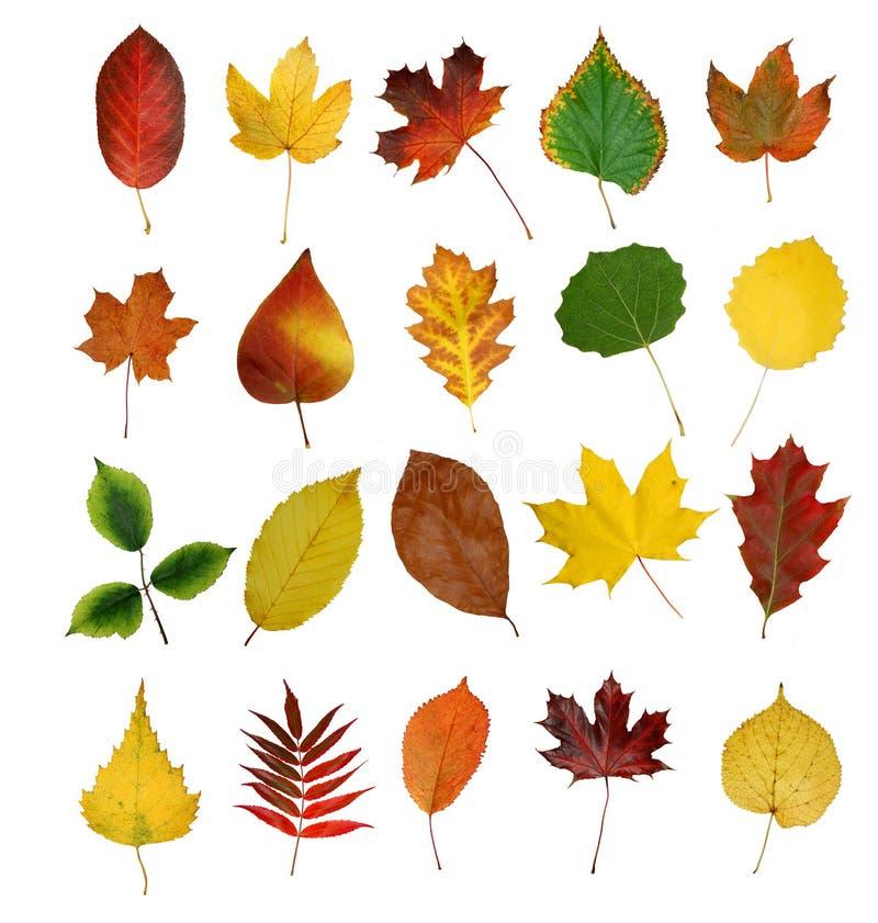 Fogli di Autumny immagine stock