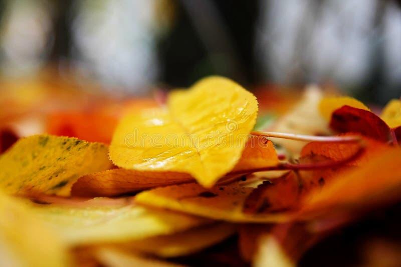 Fogli di autunno caduti fotografie stock libere da diritti