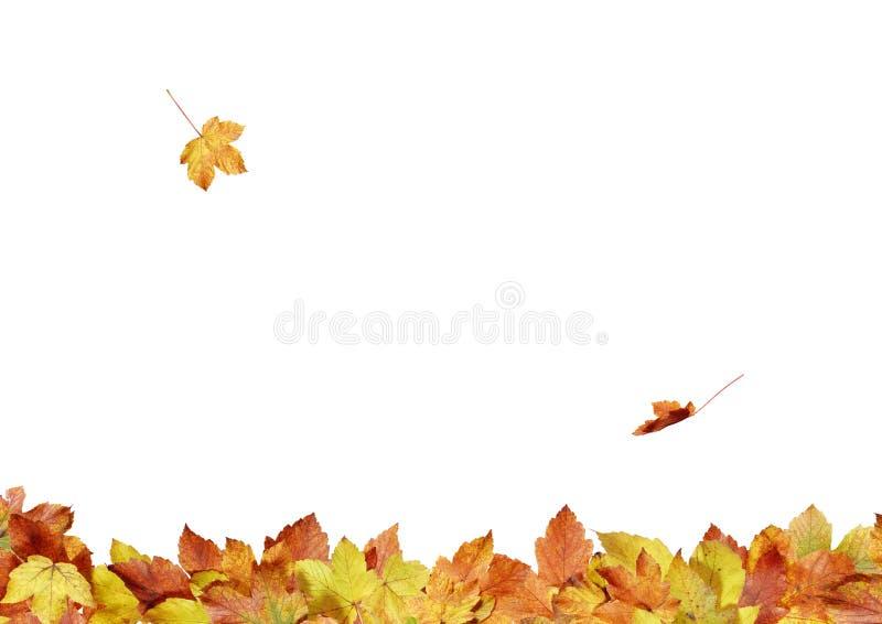 Fogli di autunno - composizione 3s1 fotografie stock