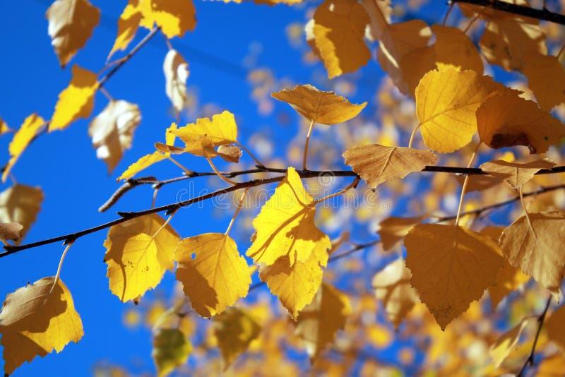 Fogli di autunno con i precedenti del cielo blu immagini stock libere da diritti