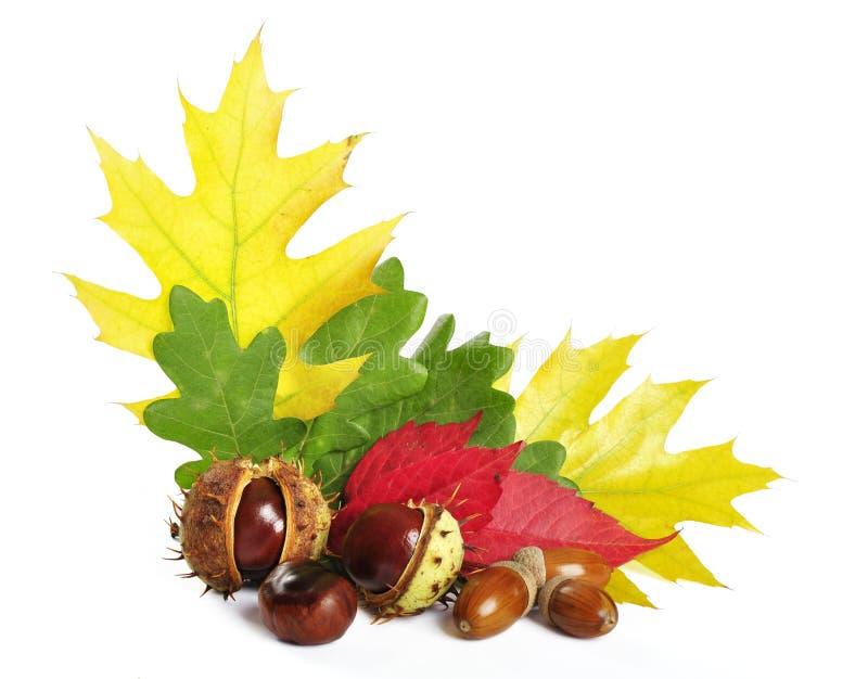 Fogli di autunno con le ghiande e le castagne immagini stock