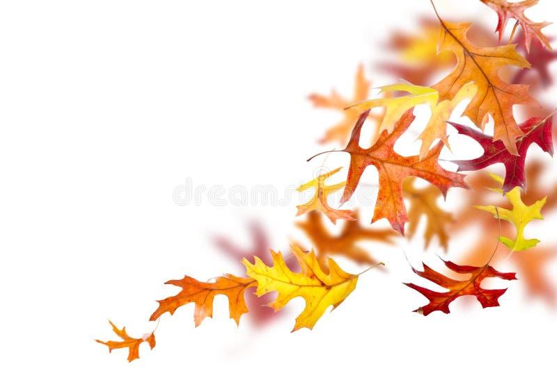 Fogli di autunno di caduta fotografie stock