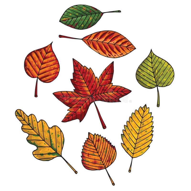 Fogli di autunno impostati illustrazione vettoriale