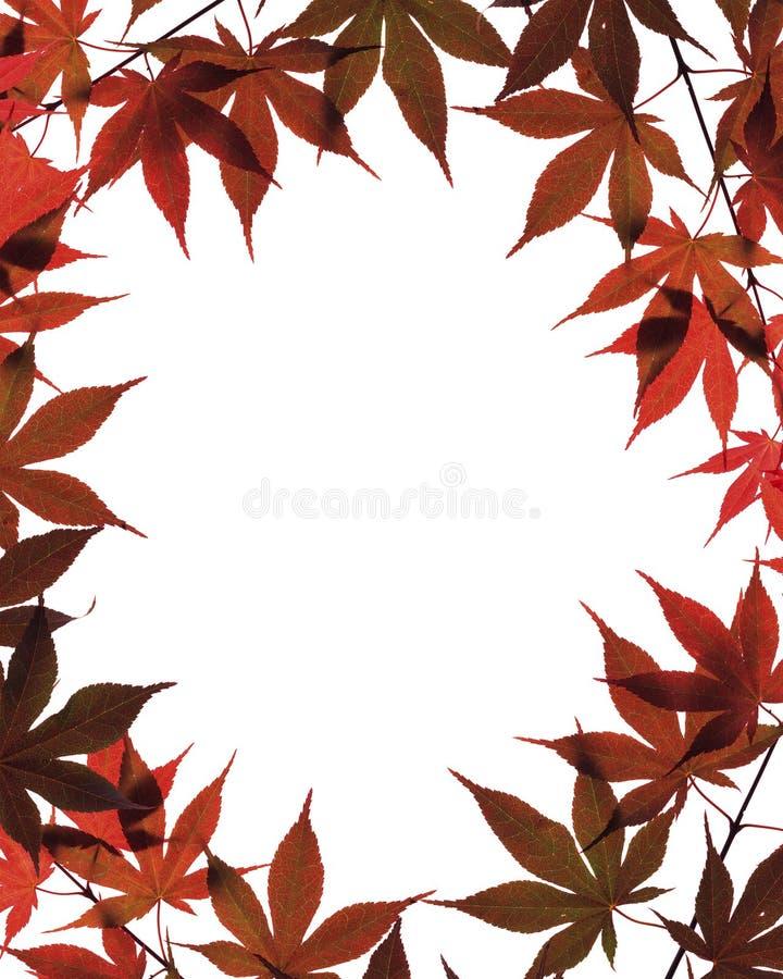 Fogli di autunno isolati su bianco fotografia stock libera da diritti