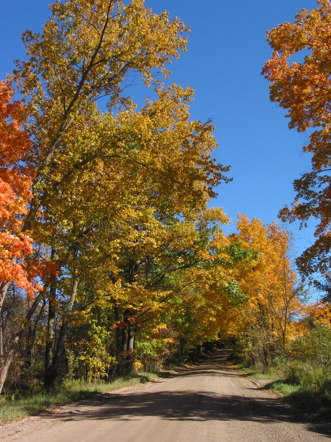 Fogli di autunno nel â 04_10_2_033 del ritratto fotografie stock libere da diritti