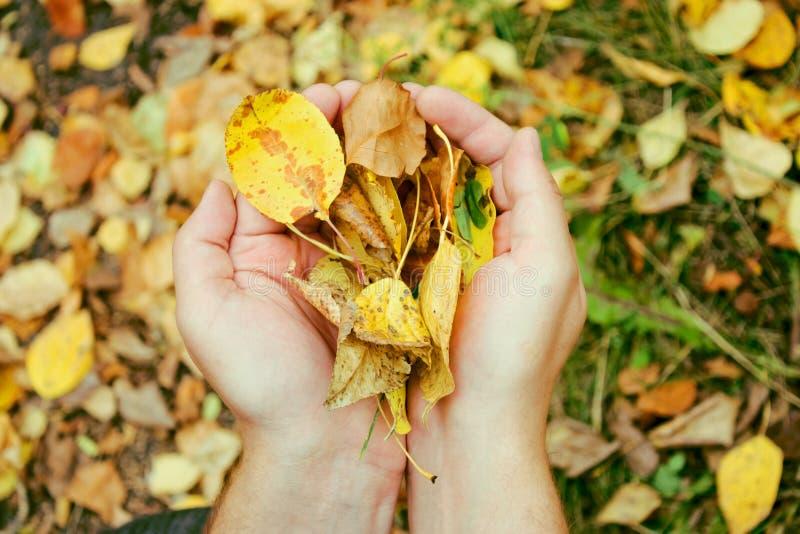 Fogli di autunno nelle mani fotografia stock
