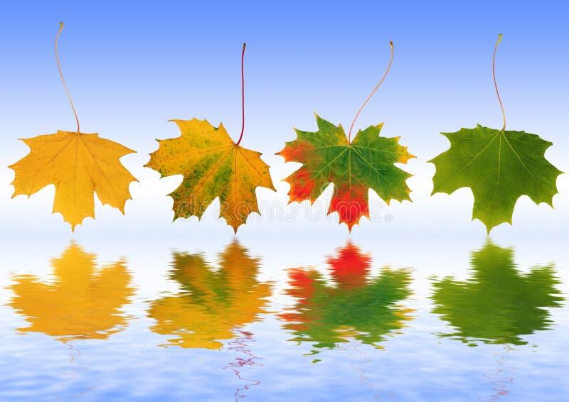 Fogli di autunno riflessi fotografia stock