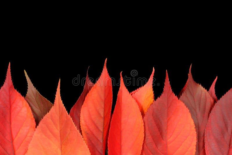 Fogli di autunno rossi che formano una fiamma di firey immagine stock libera da diritti