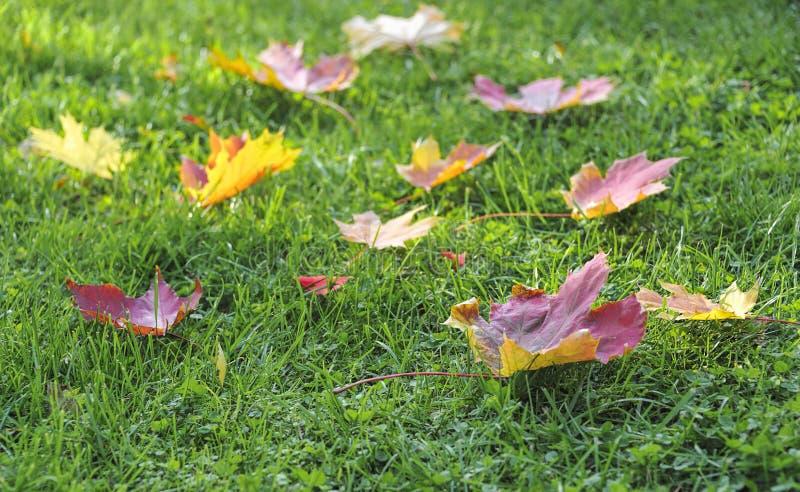 Fogli di autunno su erba verde fotografia stock