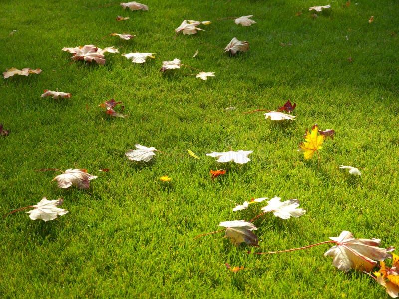 Fogli di autunno su prato inglese fotografia stock libera da diritti