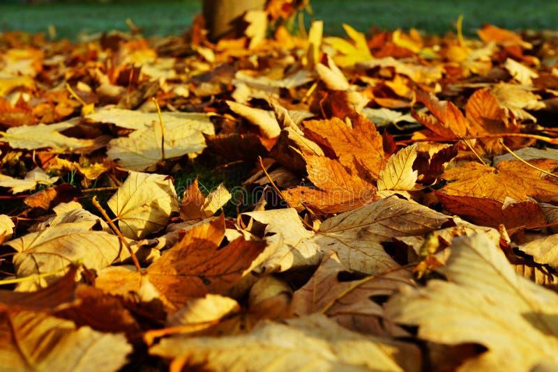 Fogli di autunno su terra immagine stock