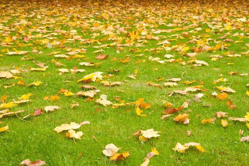Fogli di autunno su un prato inglese verde fotografie stock libere da diritti