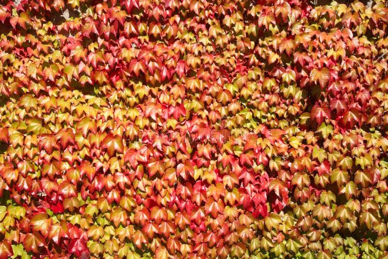 Fogli di autunno variopinti, immagine stock