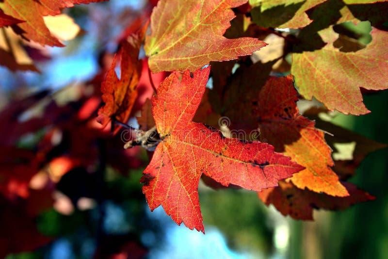 Download Fogli di caduta fotografia stock. Immagine di cambiare, autunno - 97146