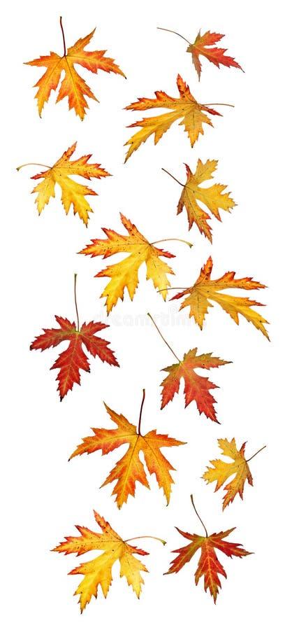 Fogli di caduta di caduta o di autunno fotografia stock libera da diritti