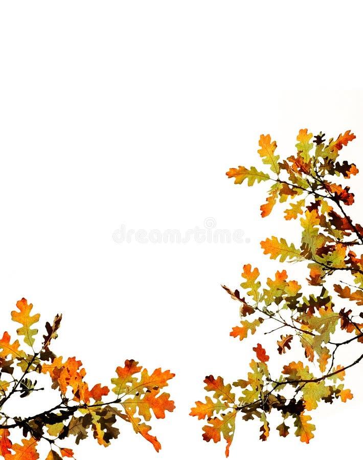 Fogli di caduta su bianco fotografie stock libere da diritti