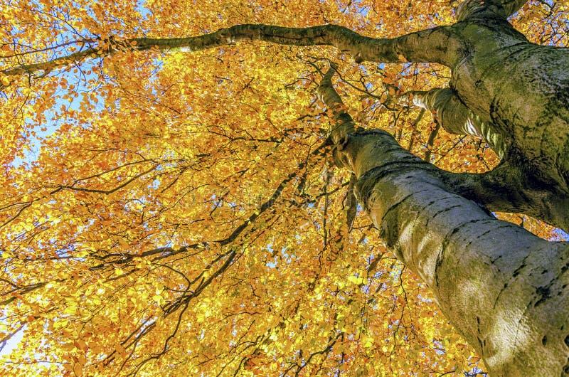 Fogli di caduta sull'albero fotografia stock