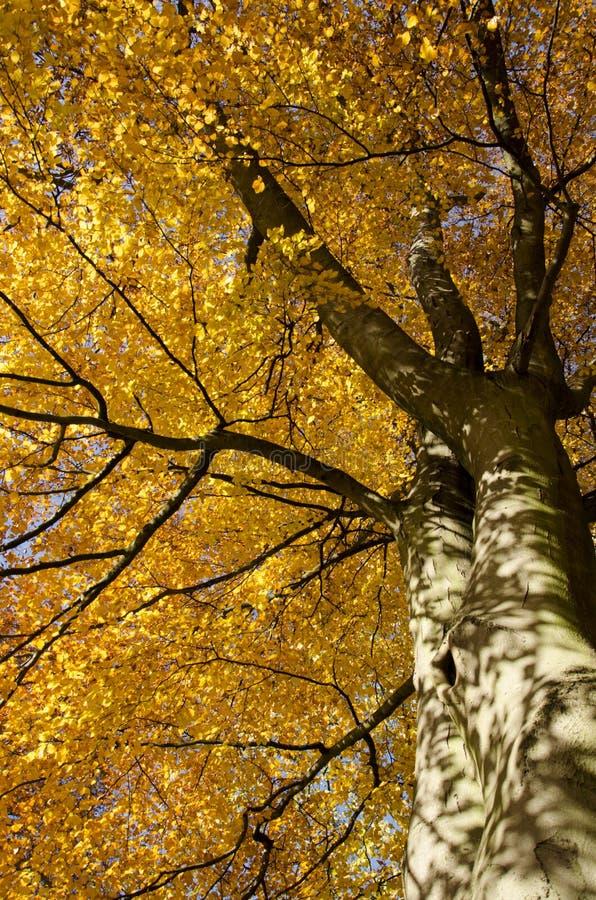 Fogli di caduta sull'albero immagini stock libere da diritti