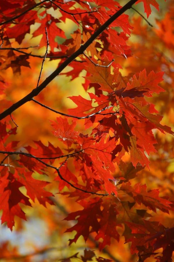 Fogli di colore di caduta fotografia stock