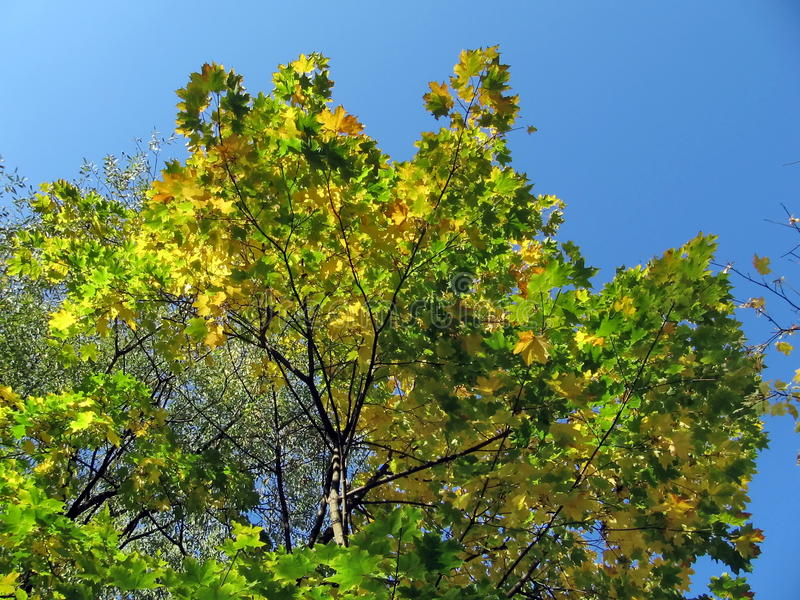 Fogli di colore giallo immagini stock immagine 12278474 - Caduta fogli di colore stampabili ...