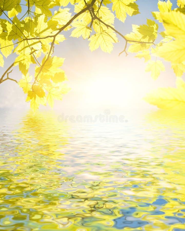 Fogli di colore giallo immagine stock immagine di aperto - Caduta fogli di colore stampabili ...