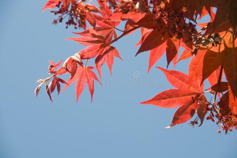 Fogli di colore rosso immagini stock