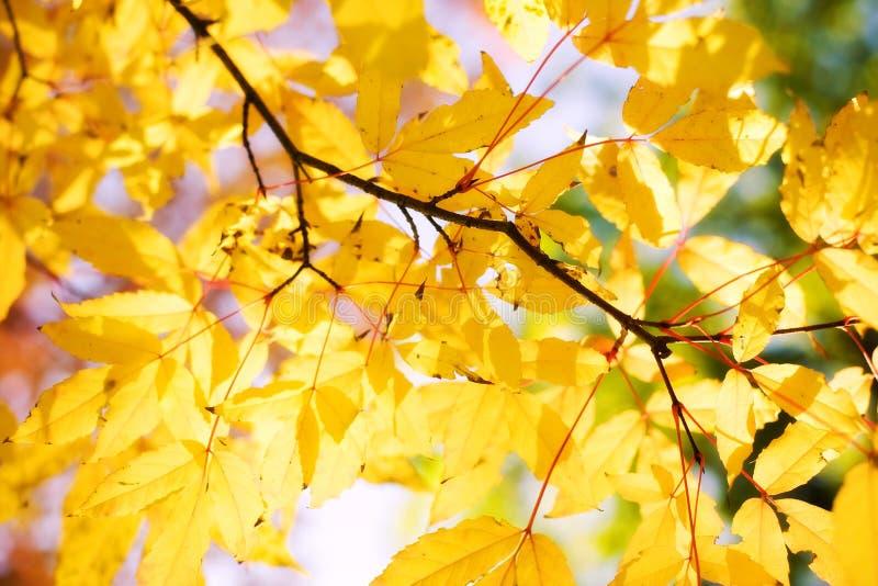 Fogli di colore rosso di autunno immagini stock libere da diritti