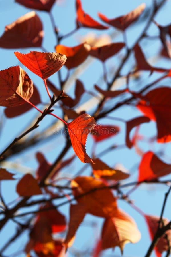 Fogli di colore rosso sopra il cielo immagine stock