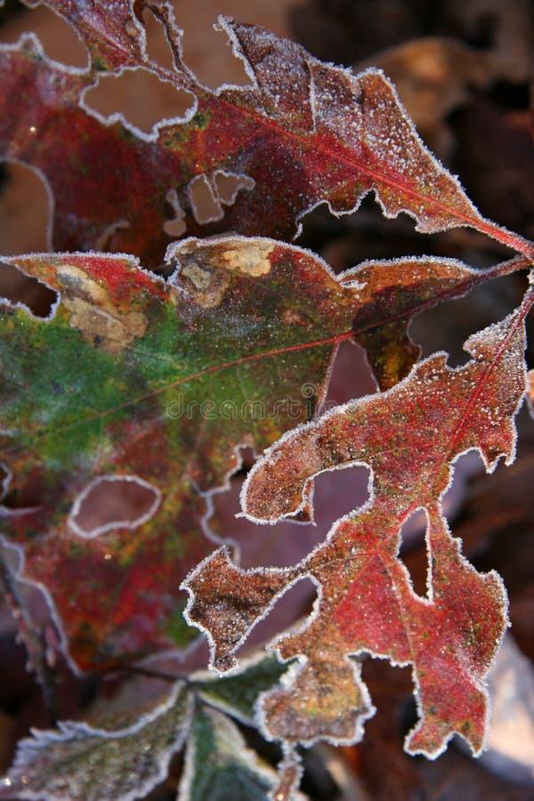 Fogli di gelo fotografia stock