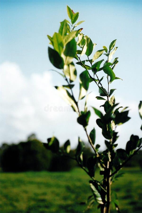 Fogli di verde fotografia stock