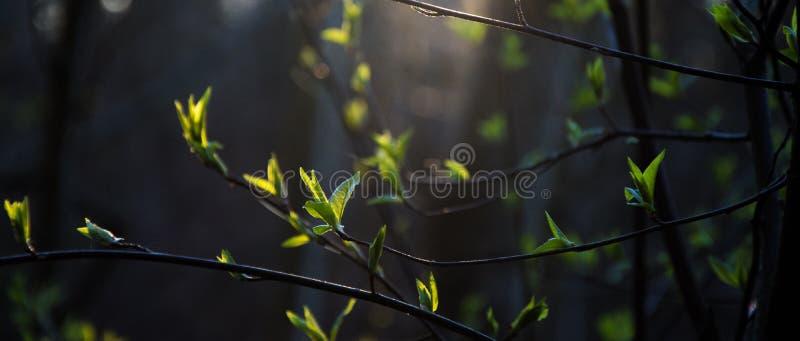 fogli di verde immagine stock