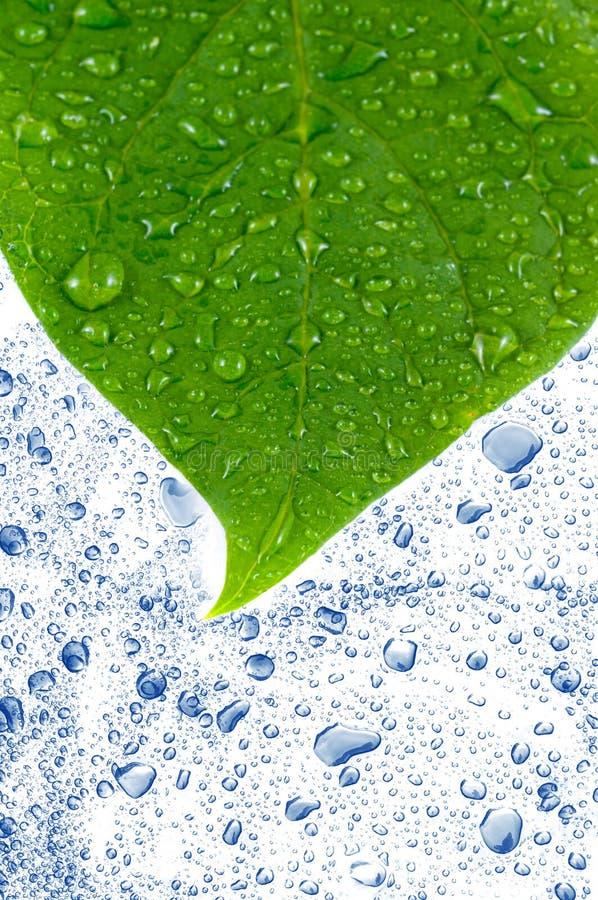 Fogli di verde in acqua. immagine stock libera da diritti