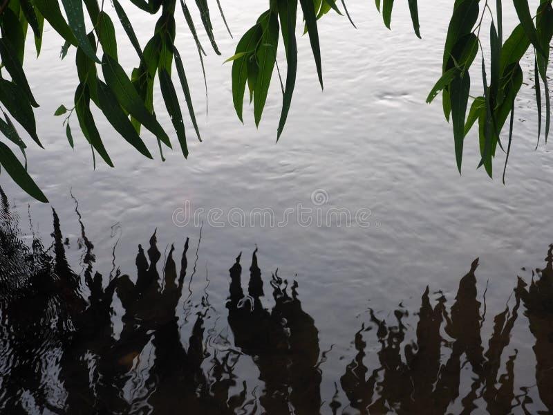 Fogli di verde che riflettono nell'acqua immagine stock libera da diritti