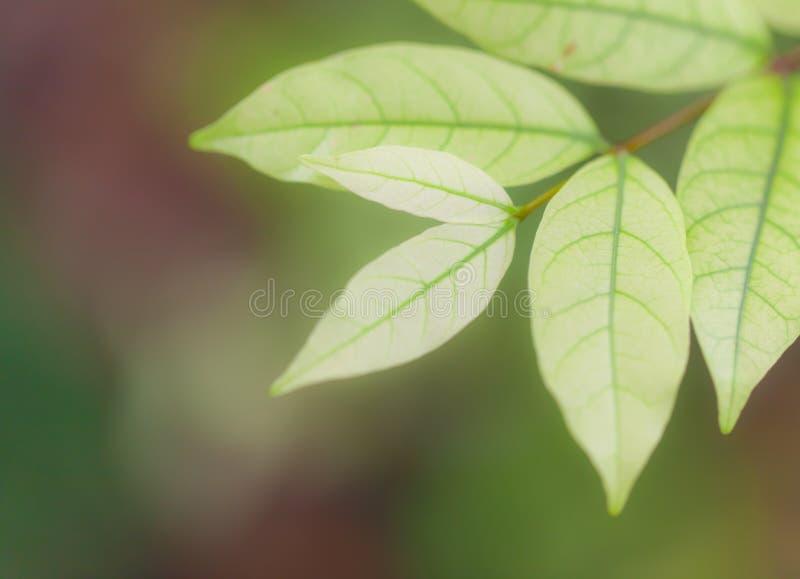 Fogli di verde della natura della priorità bassa immagini stock