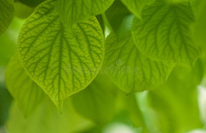 Fogli di verde, fuoco poco profondo fotografie stock