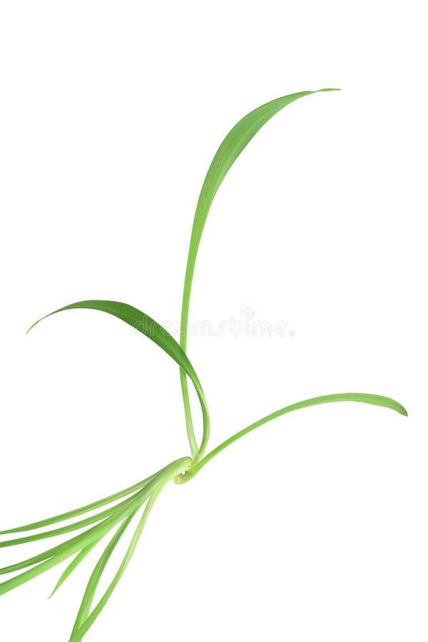 Fogli di verde lungo immagini stock