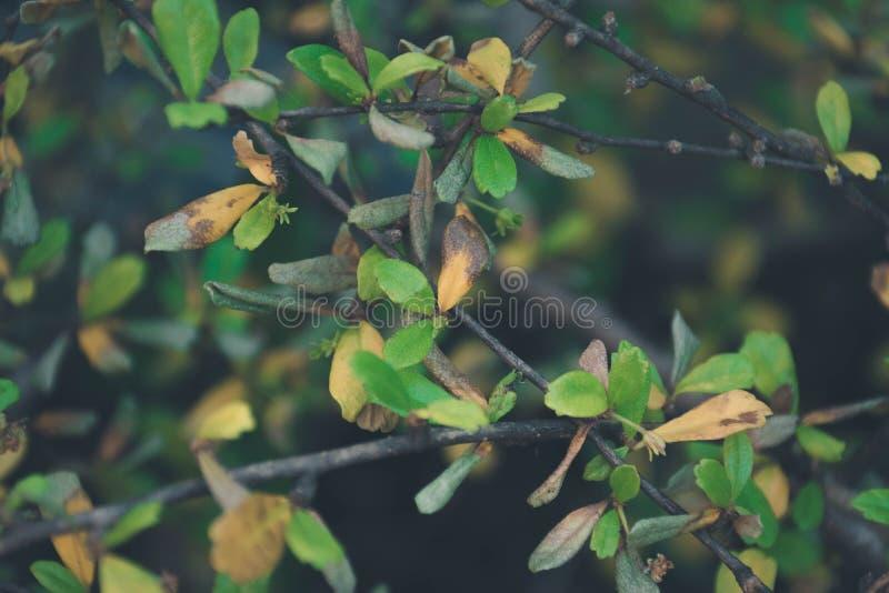 Fogli di verde su brunch immagini stock